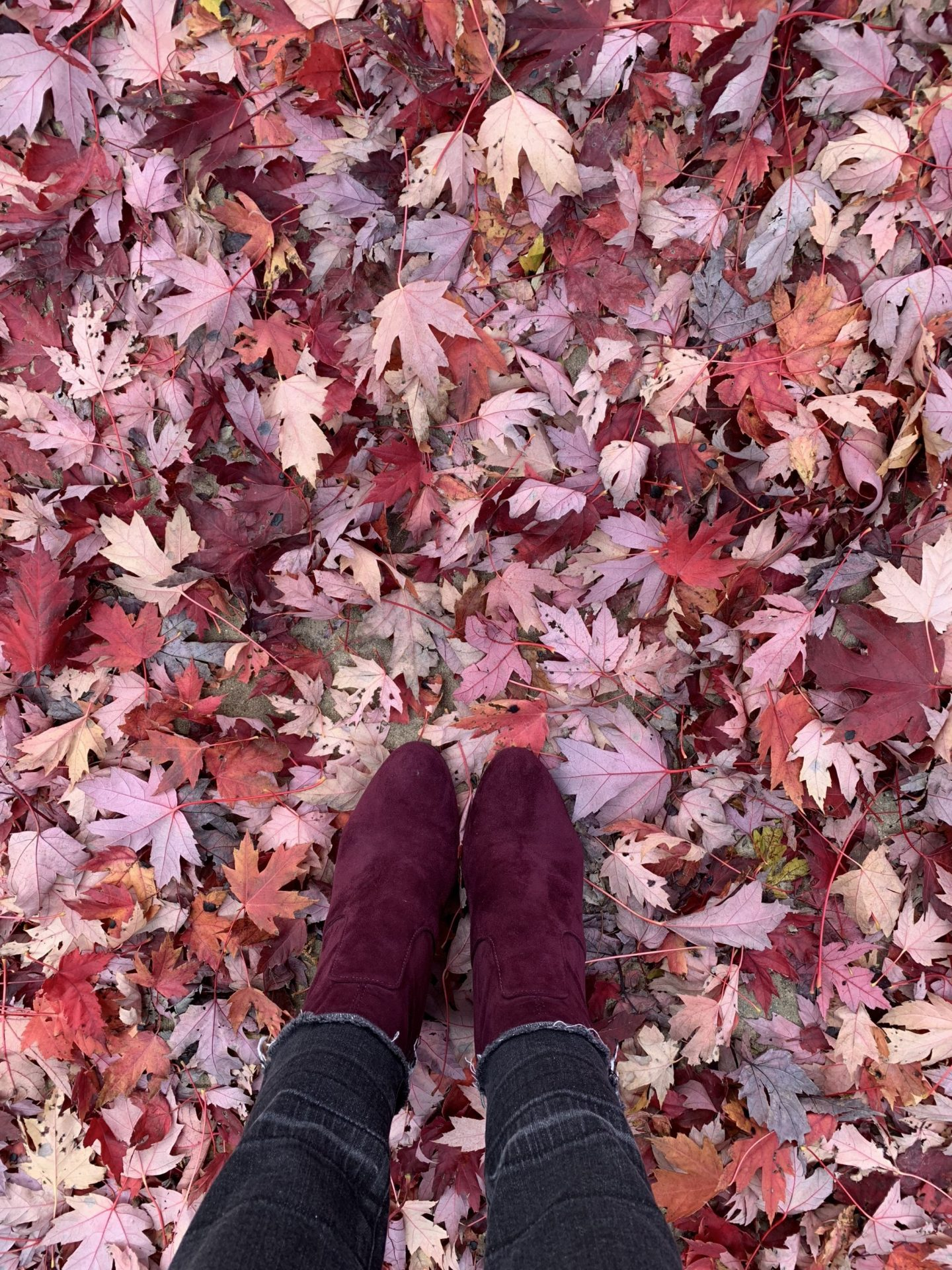 THE WISH: Burgundy Boots
